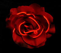 EL wire Red Rose